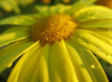 Gelbe Bäbber